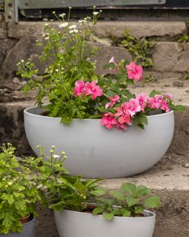 The large white recycled pot plant sits on a set of steps outside. There are two small plants in it, one with small flowers.