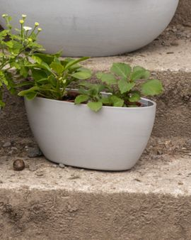 The medium oval recycled pot plant sits on a set of steps outside. There are two small plants in it.