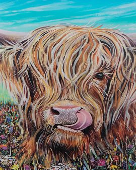 A small print of a Highland Cow with a large white border.